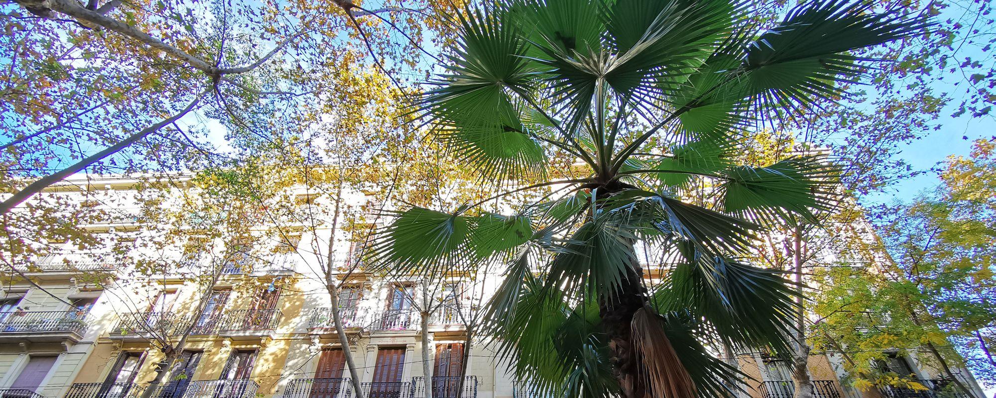 Un pic de palmier, un pic de cer, un pic de Barcelona.